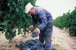 rioja vinos españa