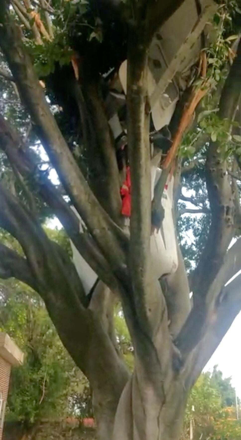 avioneta cae en árbol