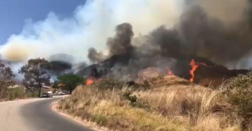Traficantes de especies en Chiapas causan incendios.png