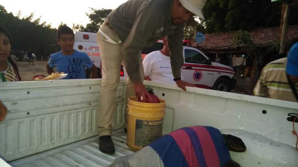 Mueren tortugas en playas de Oaxaca por marea roja, informa Profepa