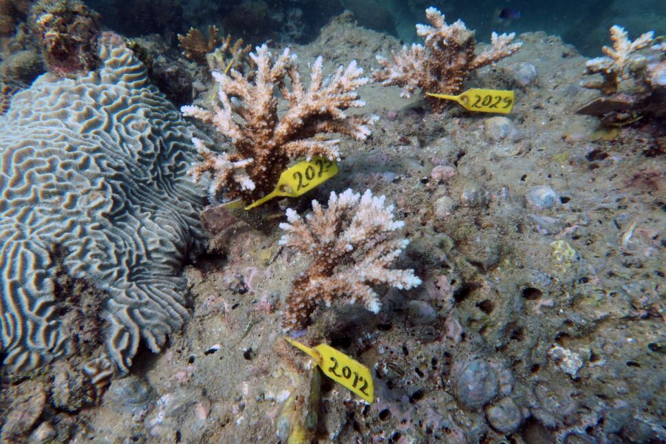 Foto del lunes de corales insertados cerca del puerto de Dibba en Fujairah, EAU
