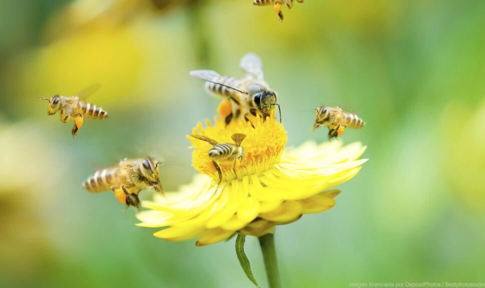 ddc abeja flores