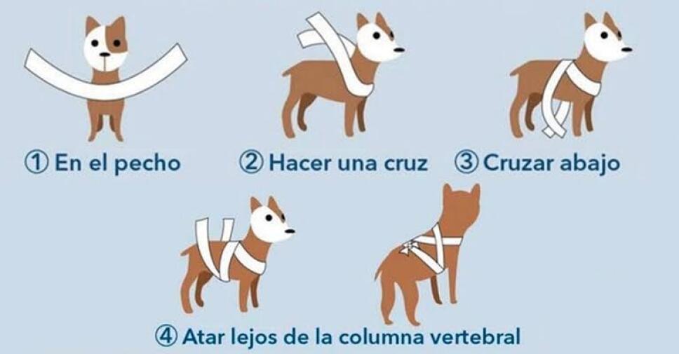 Protege a tu perro de la pirotecnia con estos consejos