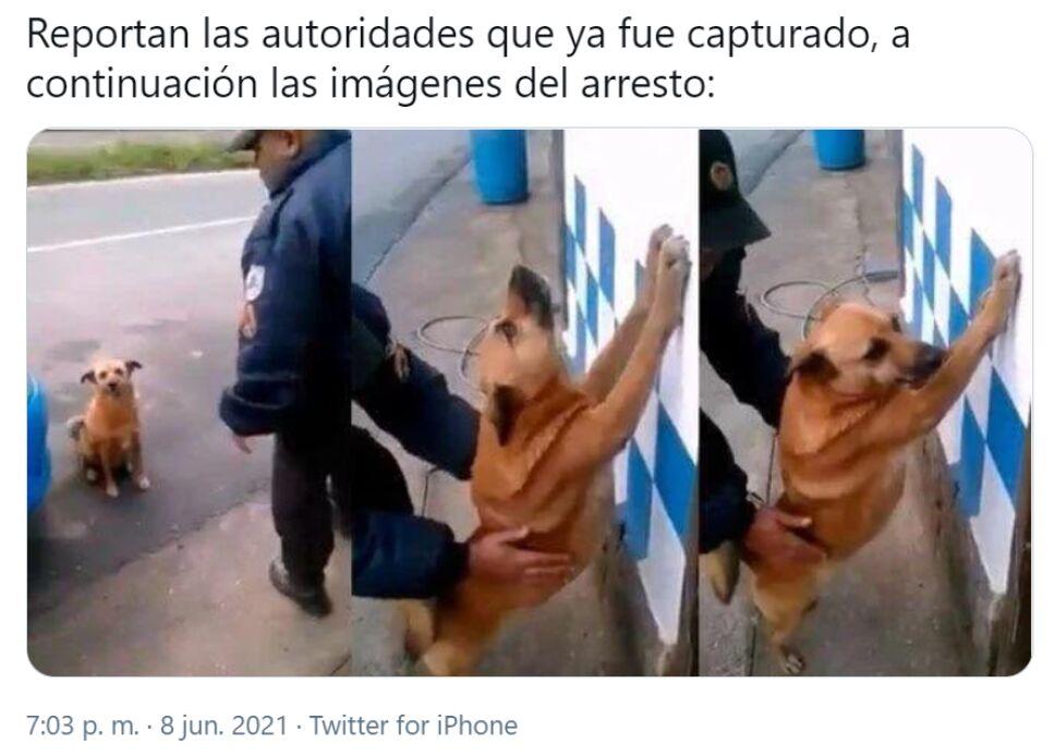 perrito_memes