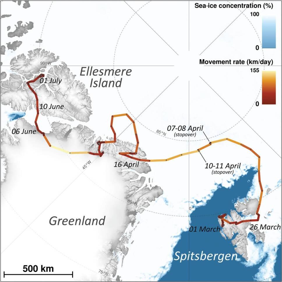 Zorra recorre más de 3 mil kilómetros de Noruega a Canadá
