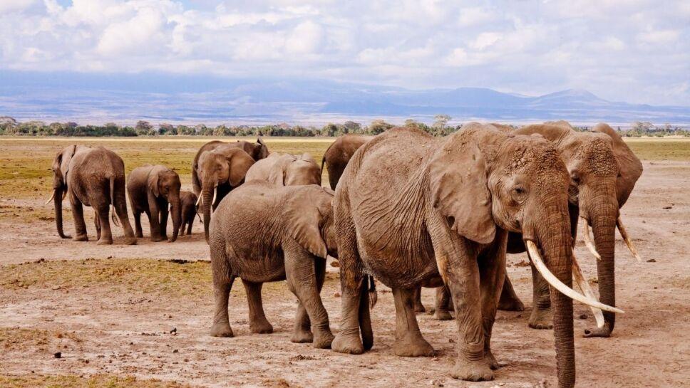 animales, peligro de extinción b.jpg