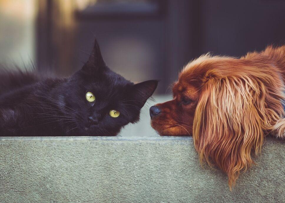 Te irás de vacaciones pero no sabes qué hacer con tu perro o gato