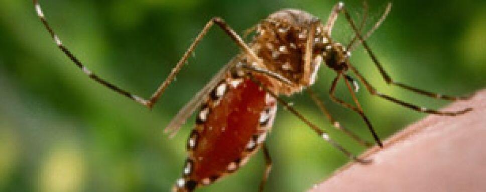 Chiapas, mosco dengue