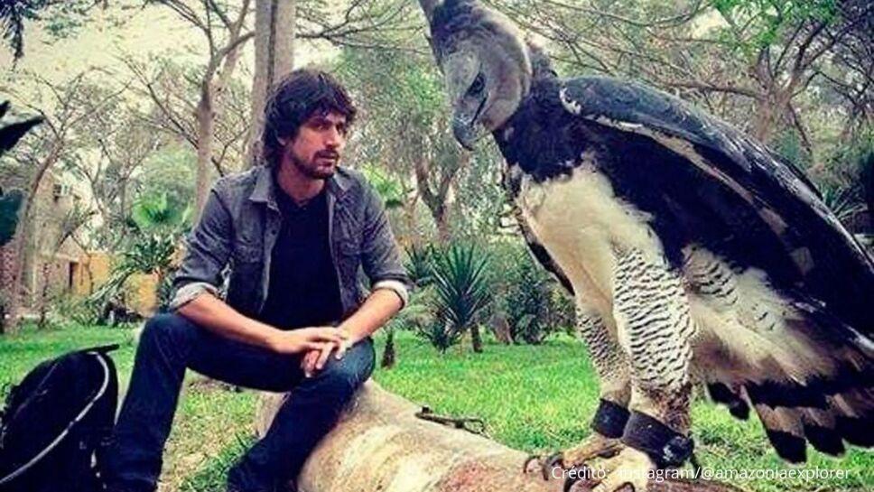 Esta es el 'águila arpía', una especie que puede alcanzar el tamaño de un humano