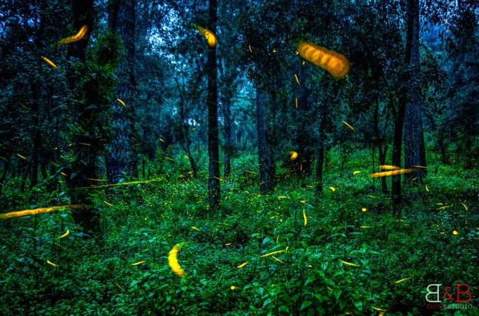 Luciérnagas iluminan las noches del Izta-Popo.jpg