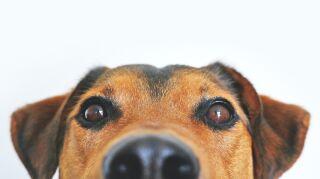 Por qué no debemos fumar cerca de nuestras mascotas