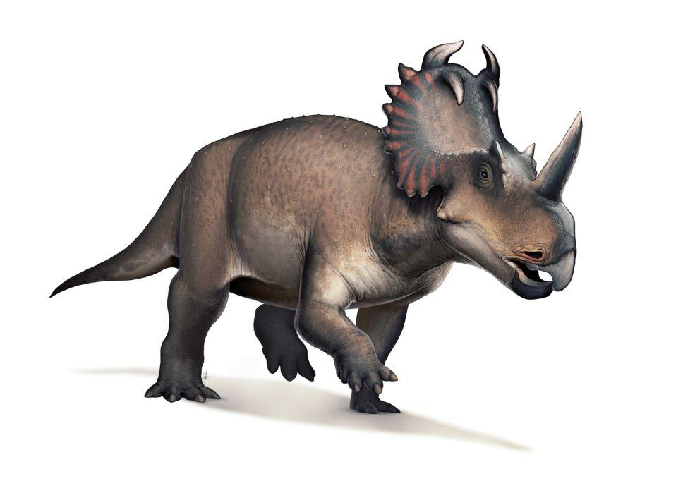 Dinosaurios, México 7.jpg
