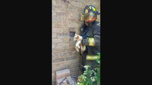 bomberosgato.JPG