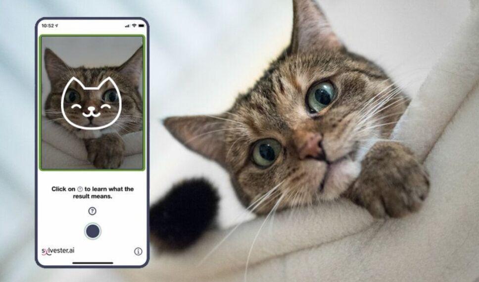 Con la cámara de un smartphone es posible conocer el estado de ánimo del animal.