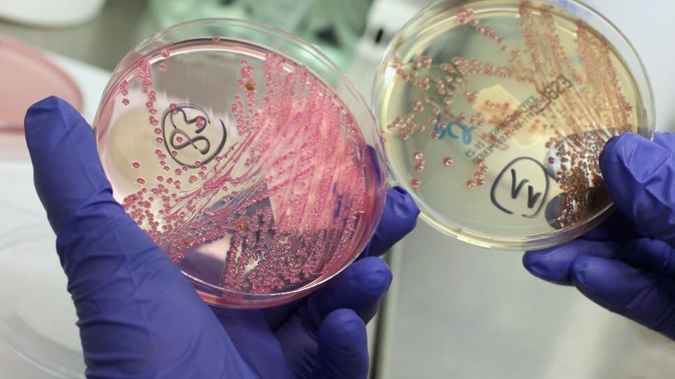 Health Authorities Seek Clues To EHEC Outbreak