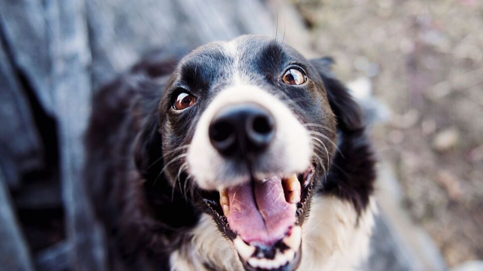 Golpe de calor, perros, síntomas B.jpg