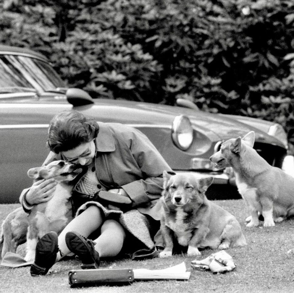 reina isabel de picnic con sus perros
