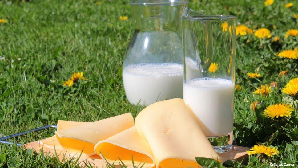 3 leche vegetal sustitutos de leche.jpg