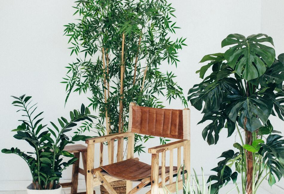 Además se puede tener en espacios pequeños ya que no crece mucho y no necesita de muchos cuidados o agua.
