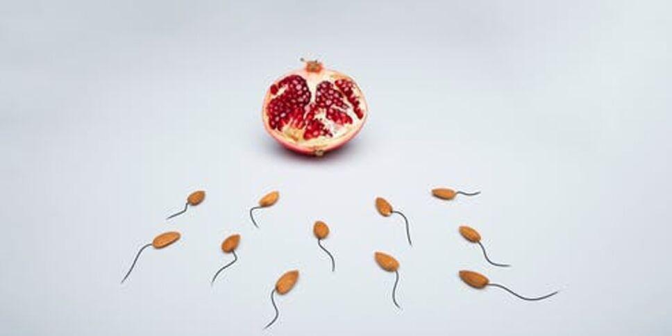 Crean método artificial para producir espermatozoides