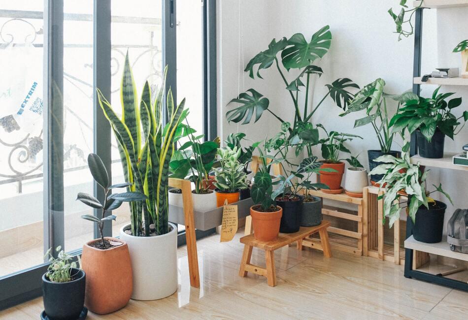 ¿Cual de estas plantas tendrás en tu hogar?