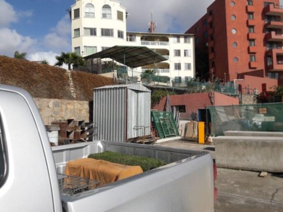 Profepa libera dos ejemplares de zorrillo rescatados en un hotel de BC