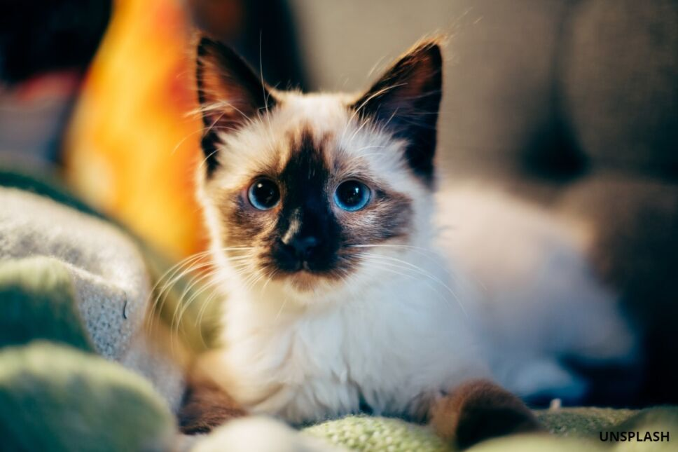 gato extraño virus