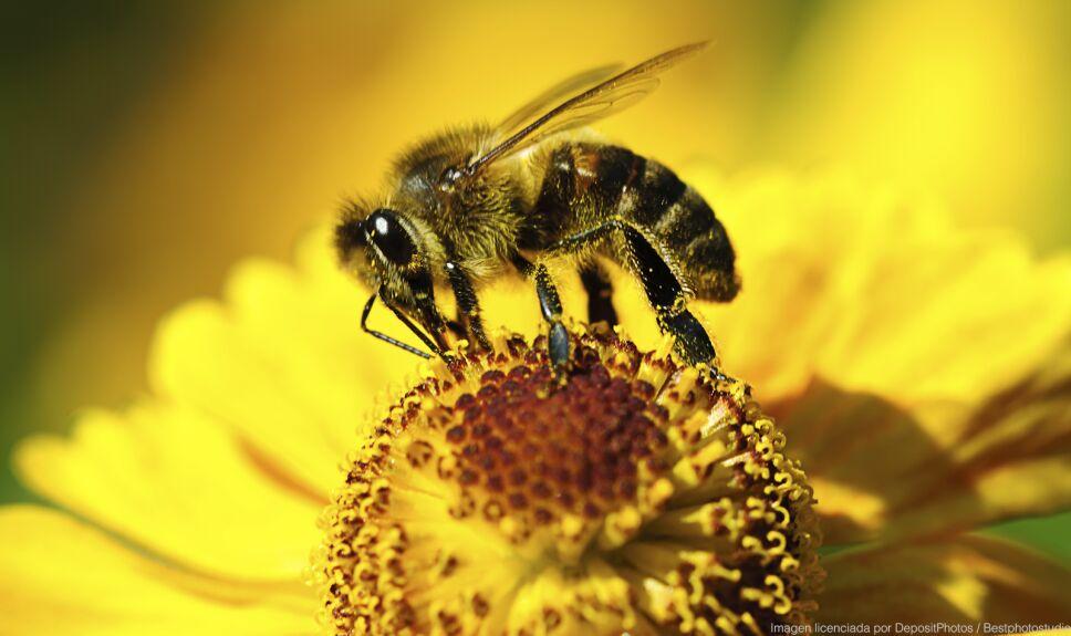 ddc abeja flor