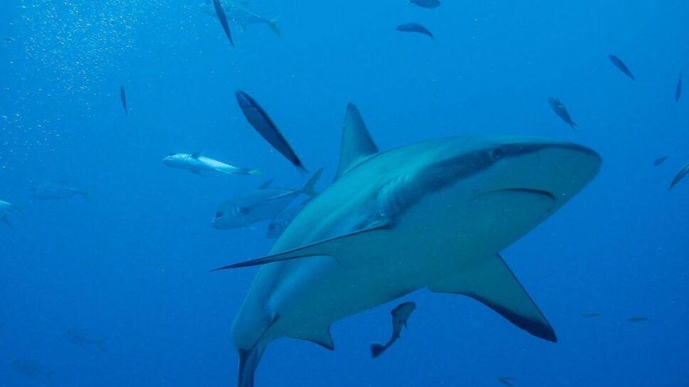 Tiburones, evolución3.jpg