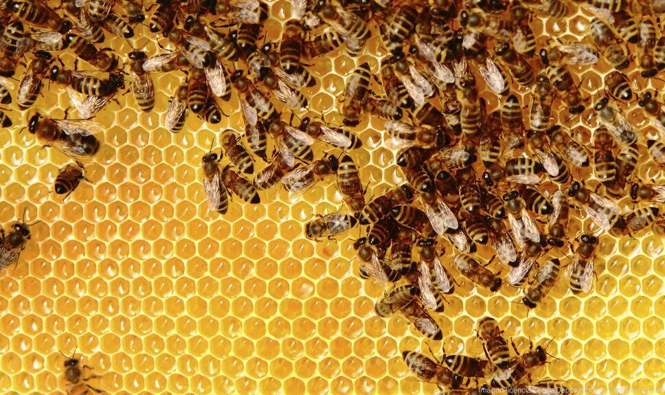 ddc panel abejas