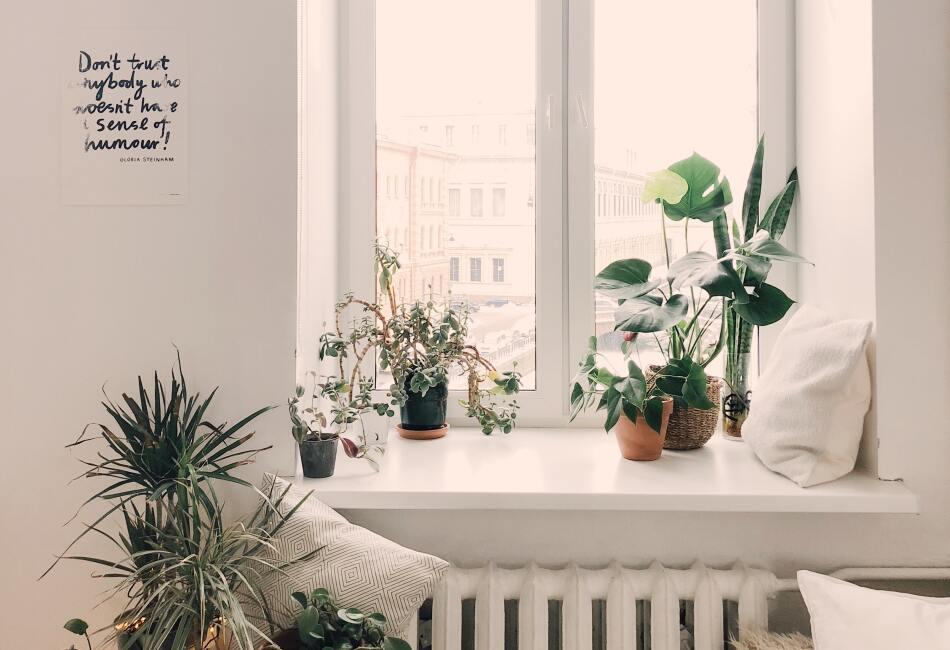 Existen 3 plantas que ayudan a purificar el aire de la polución y que además lucen hermosas en el hogar. ¡Descúbrelas!