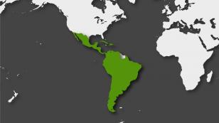 Mun_2019_Latinoamérica-01-1310x738.png