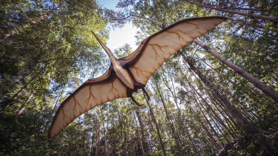 Dragón, fósil, Australia.jpg