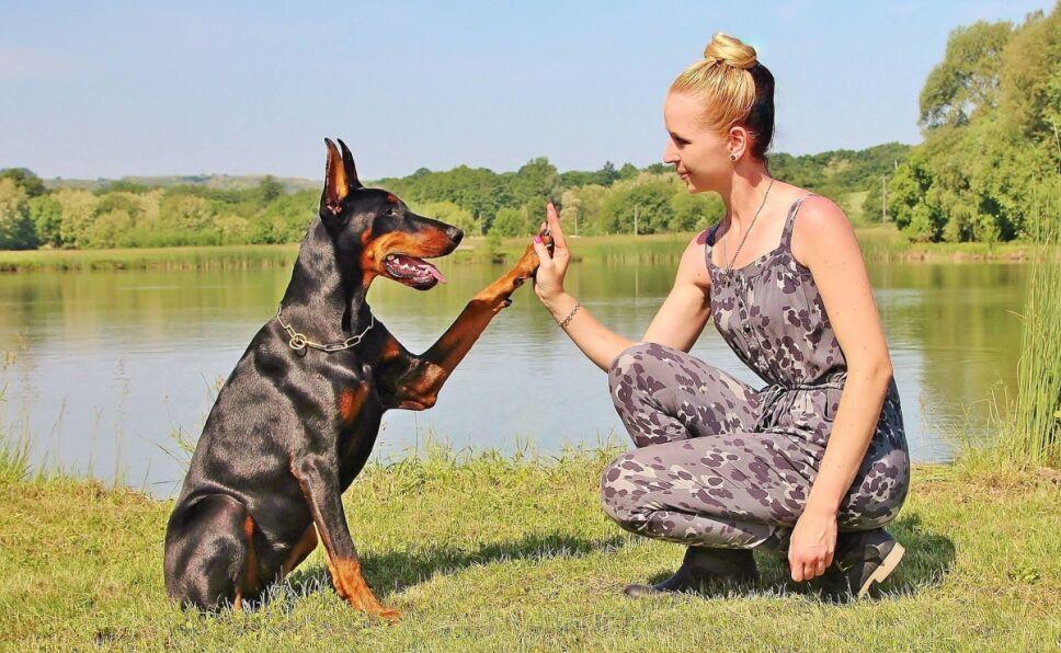 perros-inteligentes-razas