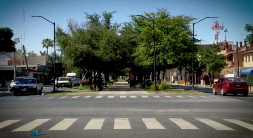 Torreón árboles nativos.jpeg