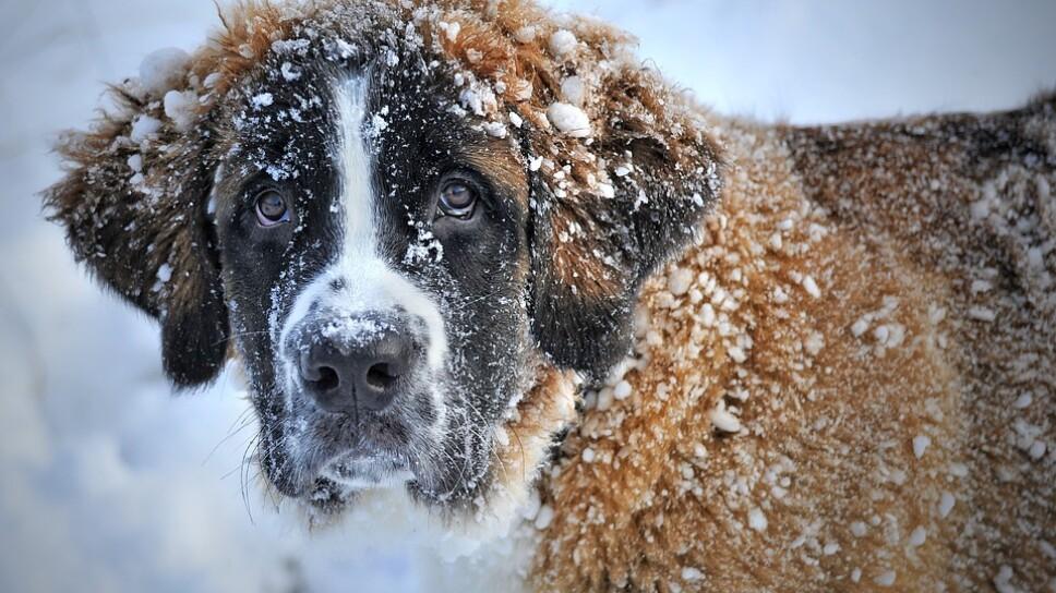 Sin importar que lo hayamos regañado, el perro siempre será fiel a nuestro cariño