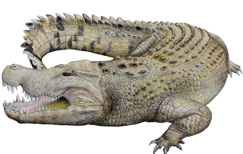 cocodrilo-australia-25-millones-años