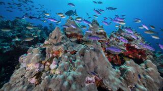 Proyecto Alacranes, la expedición que ayudará a proteger los arrecifes