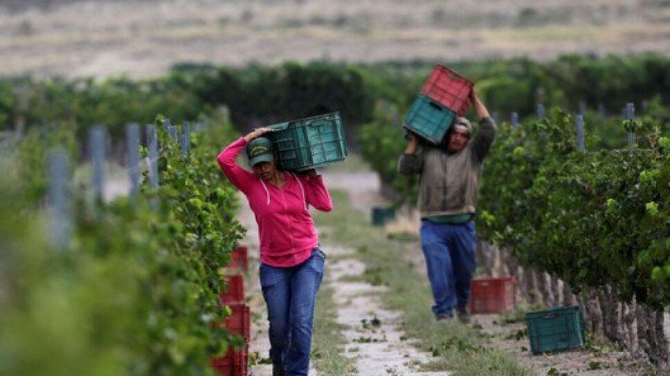 hijos-de-agricultores-mexicanos-ya-no-quieren-trabajar-medium-1160x700.jpg