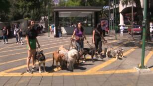 Brunito de Venga La Alegría ya está listo para su primer adiestramiento canino: Olga Marina platicó con una entrenadora de perros.