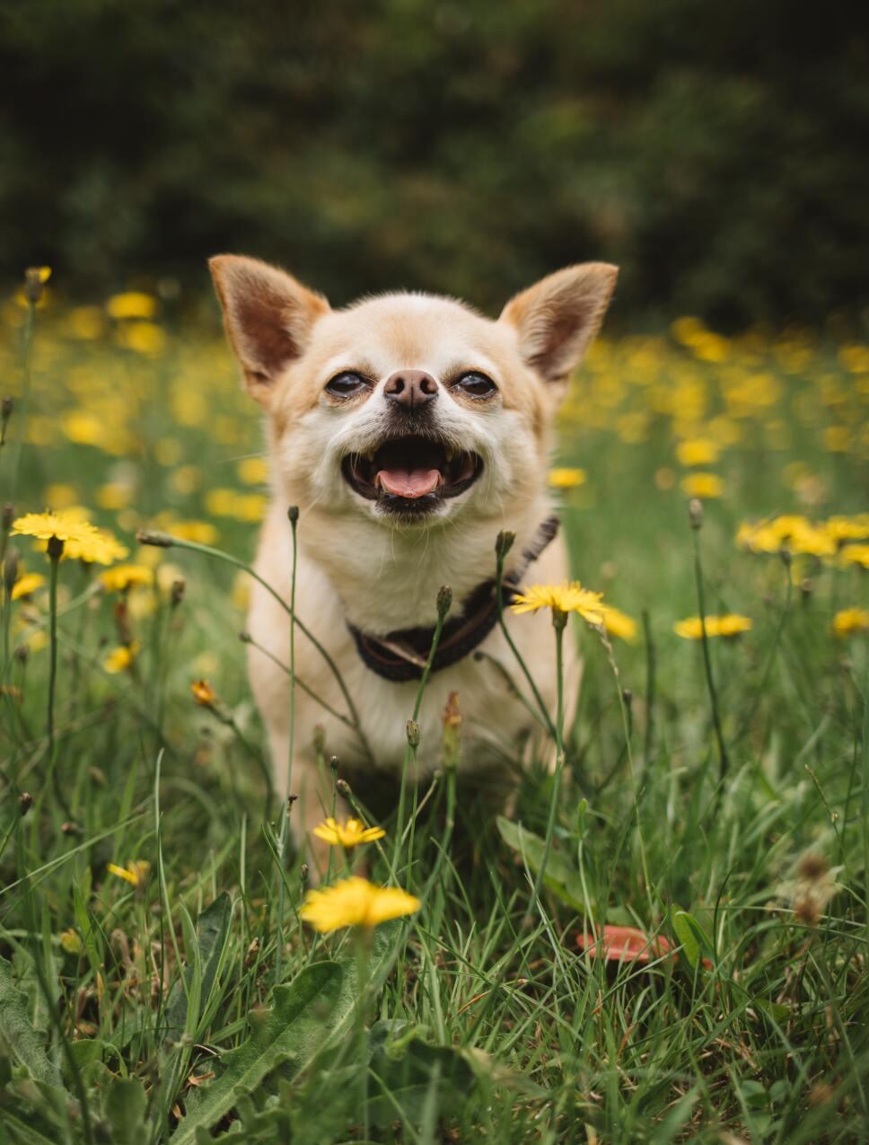Cómo hacer que tu perro conviva con otros perros