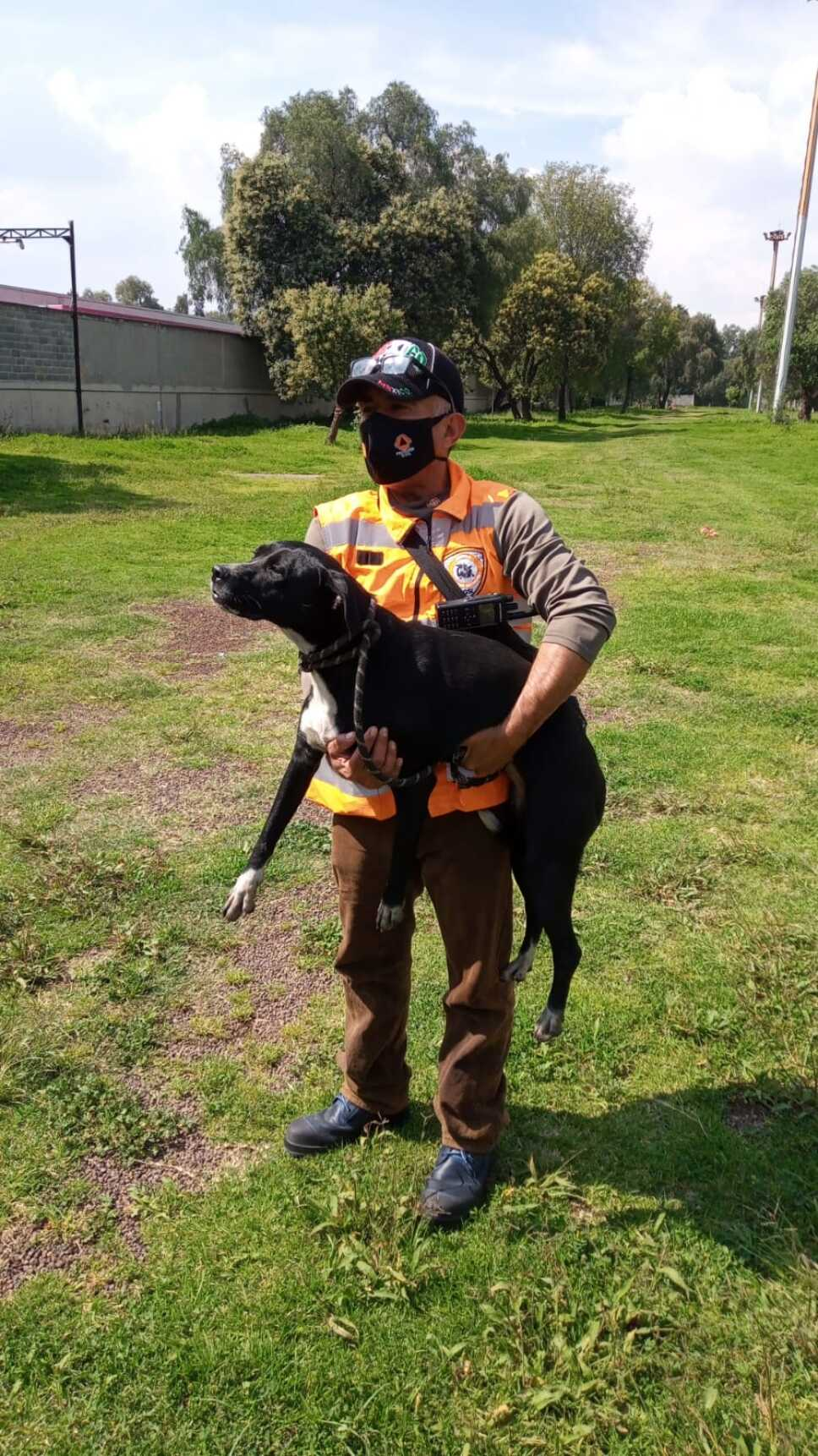 Perro rescatado de vias del Metro