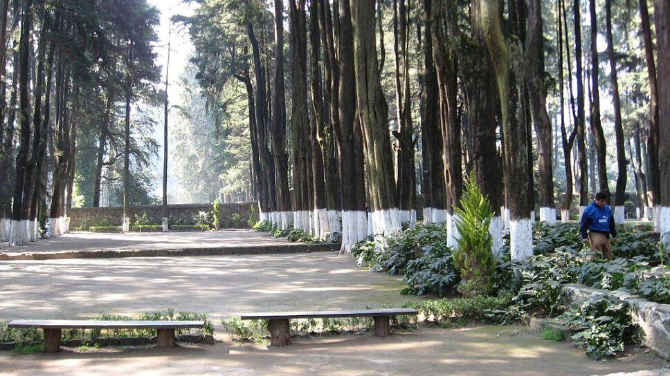Alcaldía de Álvaro Obregón apoya en reforestación del desierto de los Leones