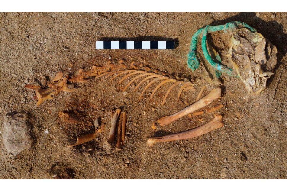 Gatos predominan en el cementerio de animales más antiguo del mundo