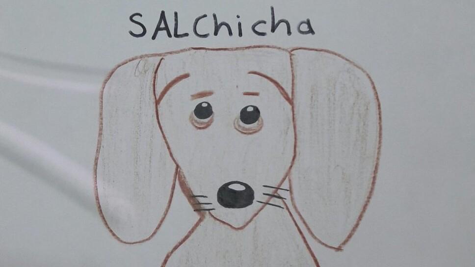 perro salchicha.jpg