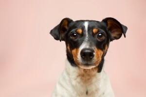 5 curiosas enfermedades que tus mascotas comparten con los humanos