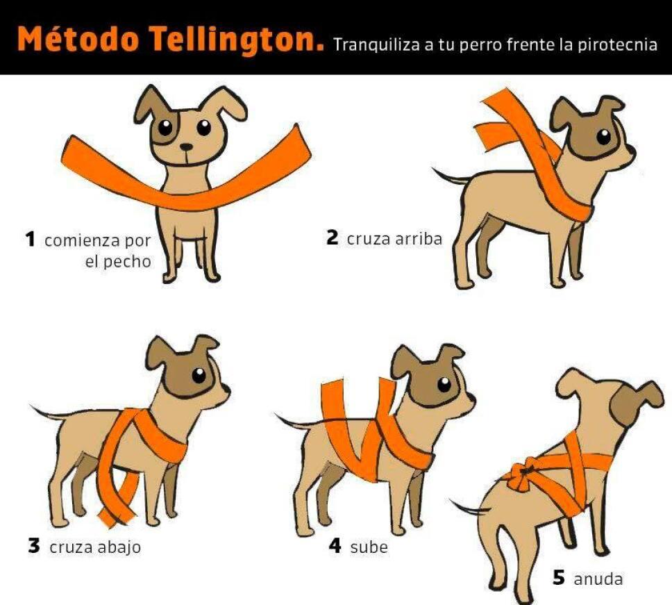 Taquicardia y miedo a morir, estos son los efectos de la pirotecnia en los perros