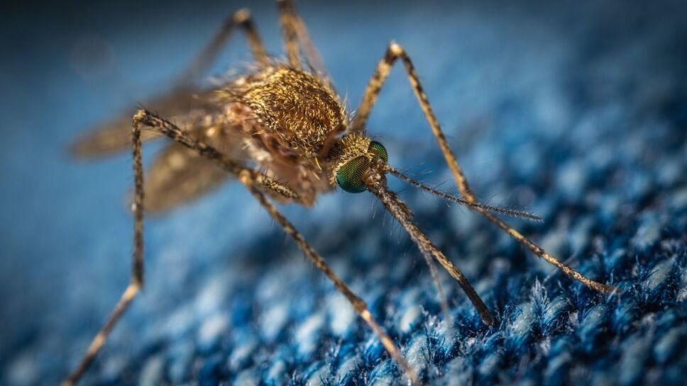 Virus del Nilo Occidental, síntomas, qué es.jpg