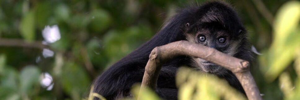Mono arana indomable x naturaleza