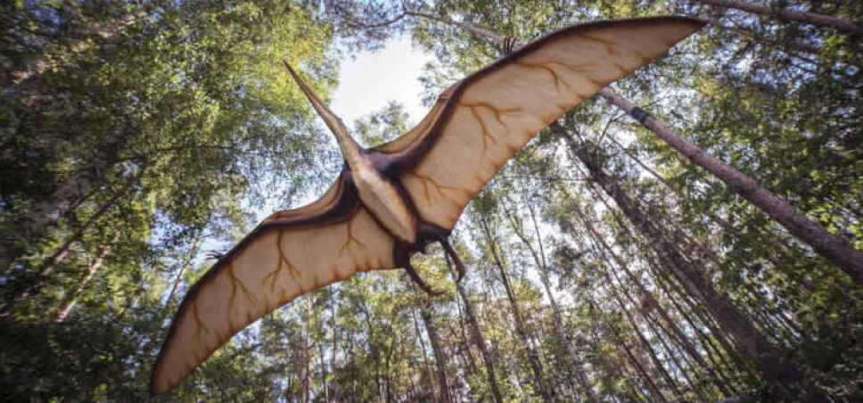 reptil volador